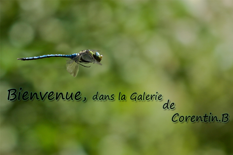 BAUSSIER Corentin - Photographies